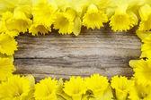 Beautiful yellow daffodils on brown wooden board. Copy space — Stock Photo