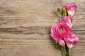 Pink persian buttercup flower and freesia flower on wooden backg — Stockfoto