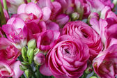 Bouquet of pink freesia flowers and pink persian buttercup flowe — Stockfoto