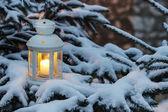 フォレスト内の fir 支店の白い提灯立っています。美しい冬 — ストック写真