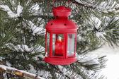Lanterne rouge suspendu à la branche de sapin — Photo