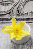 Single daffodil flower in white ceramic pot on wooden background — Photo
