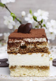 Tiramisu cake on white plate. Blossom apple branch in the backgr — Стоковое фото