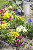 Watering plants in beautiful spring garden — Stock Photo