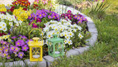 Colorful primula flowers and lanterns in spring garden — Stock Photo
