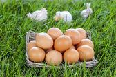Basket of eggs standing on fresh grass — Stock Photo