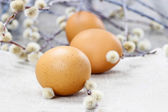 Easter eggs and catkins — Stock Photo