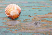 Seashells on a turquoise wooden background — Stock Photo