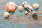 Seashells on a turquoise wooden background. — Stock Photo