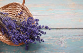 Bunch of lavender in wicker basket — Stock Photo