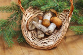 Mushrooms in the basket — Stock Photo