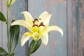 Yellow lily flowers — Stock Photo