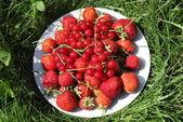 Dojrzałe truskawki i porzeczki na danie w trawie — Zdjęcie stockowe