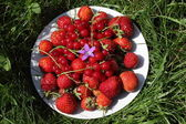 Ripe strawberries and red currants with the blue flower on the dish at the grass — Stock Photo