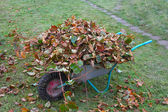 Wheel barrow with cutted branches and leaf litter front view — Stock Photo