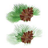 Green pine cones with branches. Vector isolated on white background. — Stock Vector