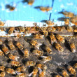 Bees entering a beehive — Foto Stock