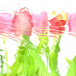 Blurred tulips isolated on white background — Foto de Stock