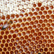 Bee on honeycomb - Foto de Stock