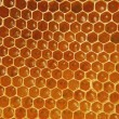 Honeycomb - Photo