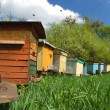 Stock Photo: Apiary in springtime