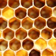 Honeycomb - Stock fotografie