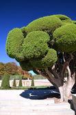 Zypressen im retiro park in madrid, spanien — Stockfoto