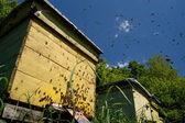 Rój pszczół w pasieki — Zdjęcie stockowe