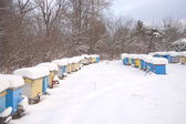 Beehives in apiary covered with snow in wintertime — Stock Photo