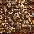 Bees on honeycomb - Foto Stock