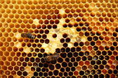 Bees on honeycomb — Stock fotografie