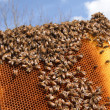 Bees on honeycomb frame against blue sky - Stock fotografie