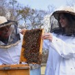 Two beekeepers working in apiary — Stock Photo