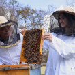 Stock Photo: Two beekeepers working in apiary
