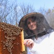 Young girl beekeeper working in apiary - Foto Stock