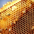 Bees on honeycomb frame - 
