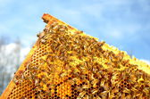 Bees on honeycomb frame against blue sky — Zdjęcie stockowe