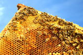 Bees on honeycomb frame against blue sky — 图库照片