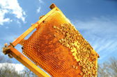 Bees on honeycomb frame against blue sky — Stock fotografie