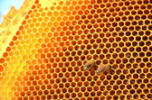 Two bees on honeycomb frame — Stok fotoğraf
