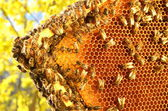 Bees on honeycomb frame against blue sky in the springtime — Stok fotoğraf