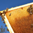 Bees on honeycomb frame against blue sky - 