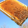 Bees on honeycomb frame against blue sky - Foto Stock