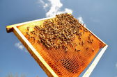Bees on honeycomb frame against blue sky — Stok fotoğraf