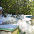 Experienced senior apiarist in his apiary setting a fire in a bee smoker — Foto de Stock