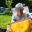 experienced senior beekeeper working in his apiary in the springtime — Stock Photo