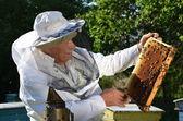 Doświadczony pszczelarz starszy, działa w jego pasieki na wiosnę — Zdjęcie stockowe