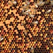 Hardworking bees on honeycomb — Stock Photo