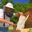 Experienced senior beekeeper working in apiary  — Стоковая фотография