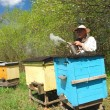 Experienced senior beekeeper working in apiary - Stockfoto